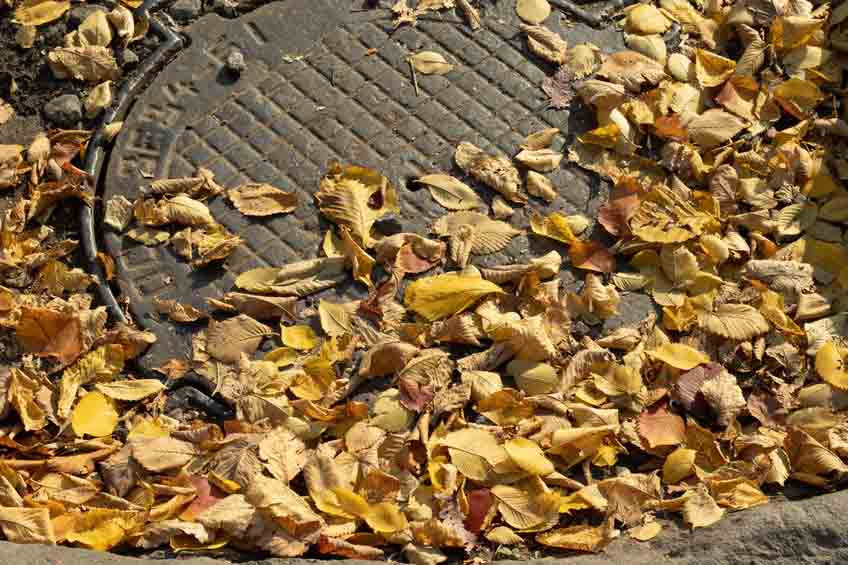 Sewer Maintenance Tips This Fall